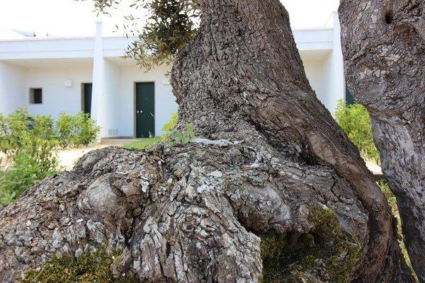 Hotel Vicario Puglia - фото 11