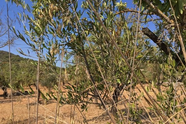 Agroturismo Binibasa - фото 21
