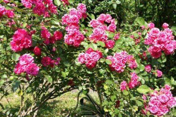 Guest House Villa Roza - 13