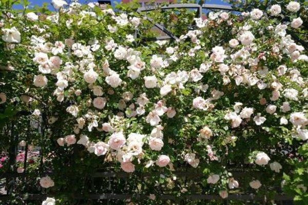 Гостевой дом «Вилла Роза» - 16