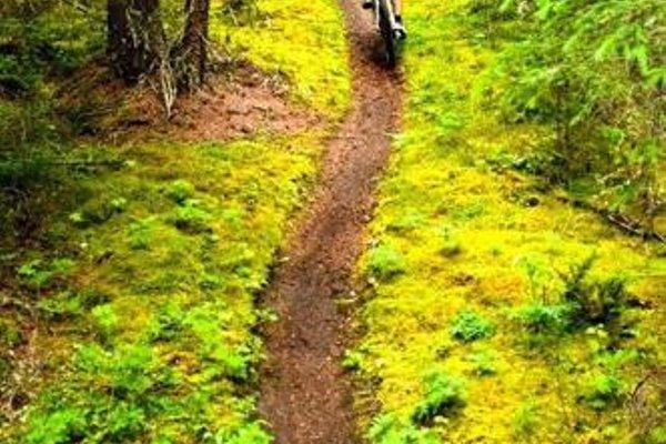 Апартаменты «Bansko Royal Towers 723» - 21