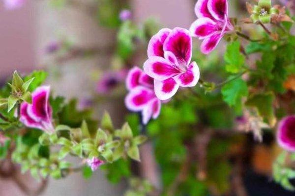Casa Rural Don Lope - фото 17
