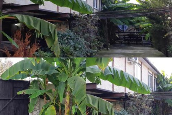 U Palycha Guest House - photo 19