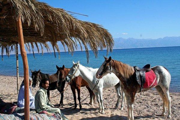 Al Sayadeen Village Red Sea Riviera - фото 12