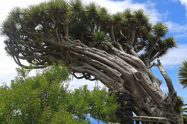 La Palma Sun Nudist - фото 12