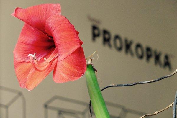 Hotel Prokopka - фото 15