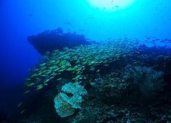 BB Island House Dhigurah фото 3