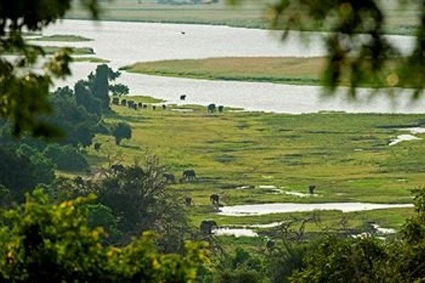 Sanctuary Chobe Chilwero - фото 11