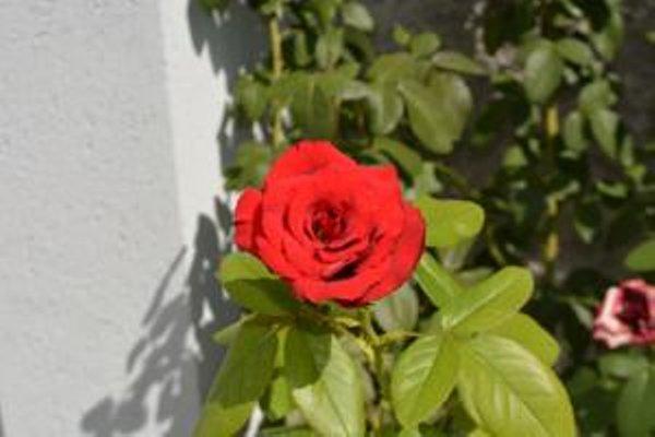 Rose Garden Hotel - фото 20