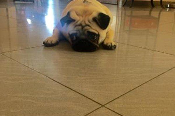 Hotel Ciondolo D'Oro - фото 13