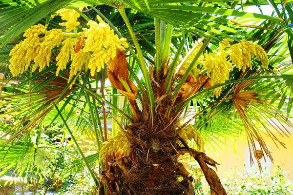 Пансионат Орхидея - фото 15