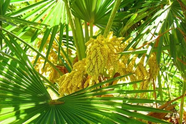 Пансионат Орхидея - фото 16