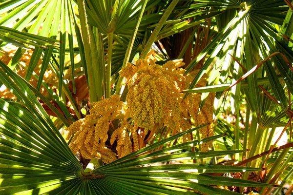 Пансионат Орхидея - фото 18