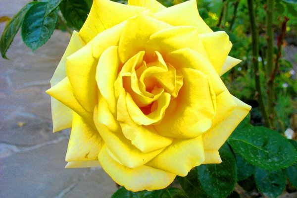 Пансионат Орхидея - фото 3
