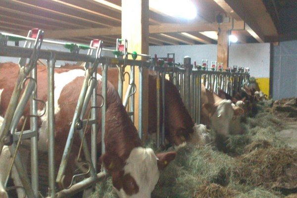 Bauernhof Verwohnbauernhof im Muhlviertel - фото 10