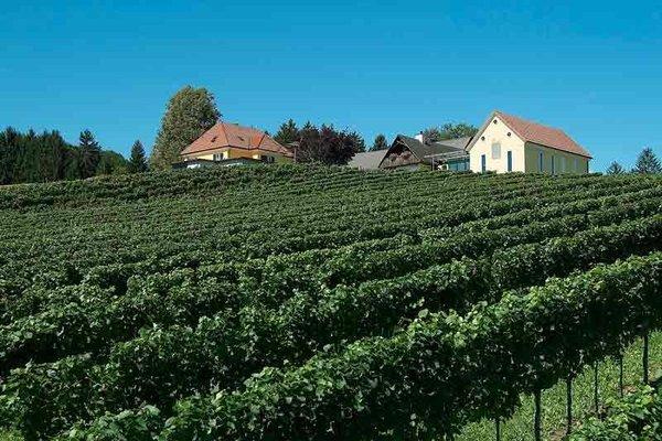 Bauernhof Peiserhof Wein & Ferien - фото 19