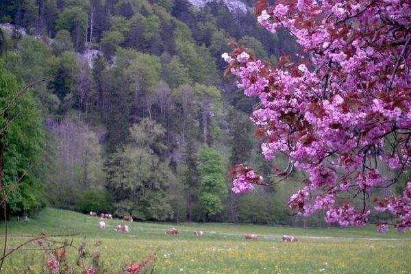Bauernhof Urbanhof - фото 4