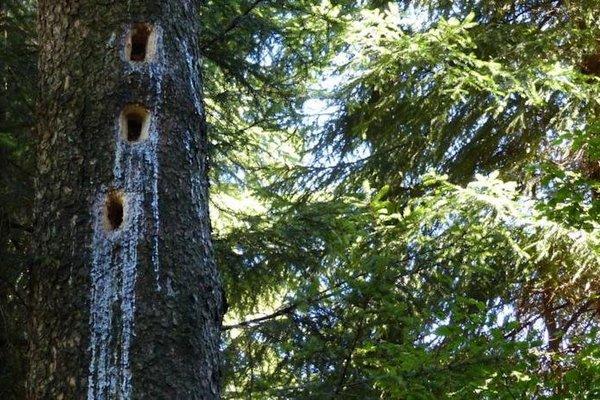 Haus Wald-Eck - 11