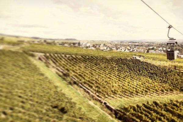 Historisches Weinhotel Zum Grunen Kranz - фото 21