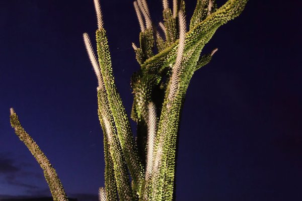 Relais Garden Cactus B&B - фото 19