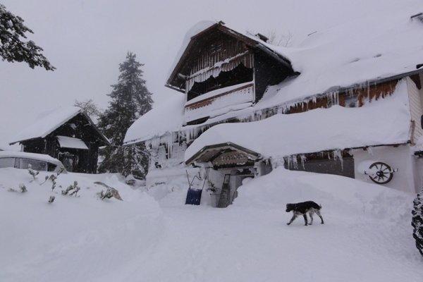 Bauernhof Tritscherhof - фото 14