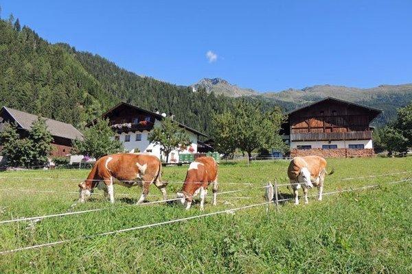 Bauernhof Oberthalerhof - фото 4