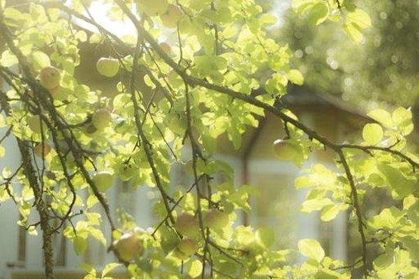 Hotel Villa Katariina - фото 10
