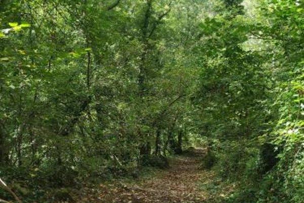 Casa Font de Seuri - фото 3