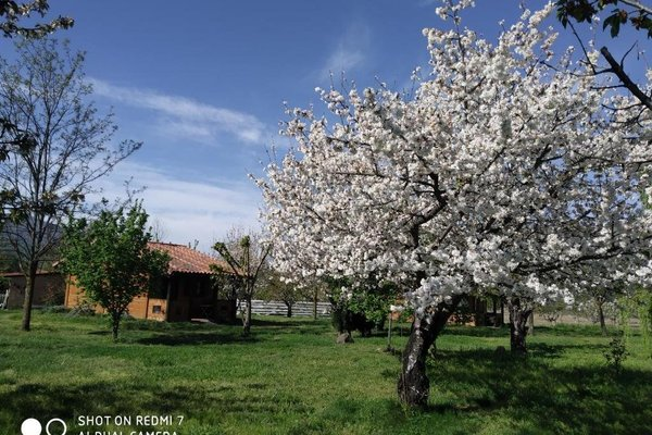 Apartamentos Rurales El Rincon del Jerte - фото 3