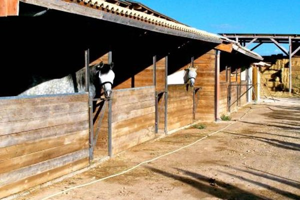 El Rancho Los Montesinos - Torrevieja - фото 12