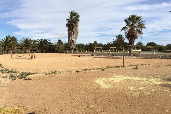 El Rancho Los Montesinos - Torrevieja - фото 16