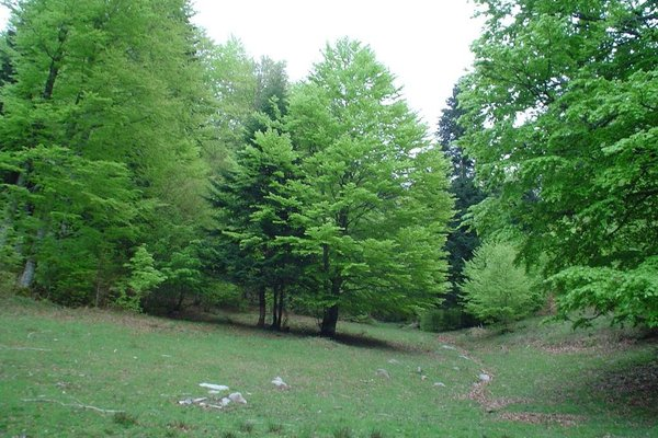 Rural Besaro - фото 13