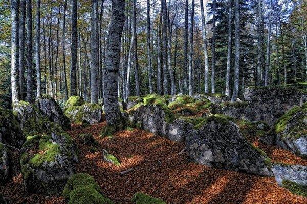 Rural Besaro - фото 15