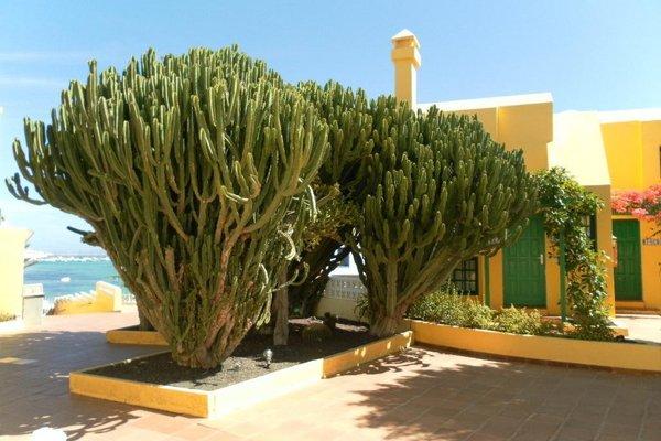 Apartamentos Caleta Playa - фото 18