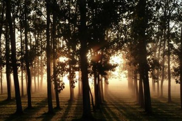 All Seasons Country Lodge - фото 21