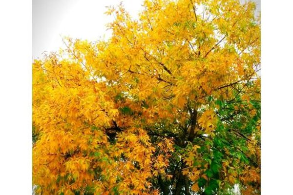 Apartamentos Valle del Guadalquivir - фото 10