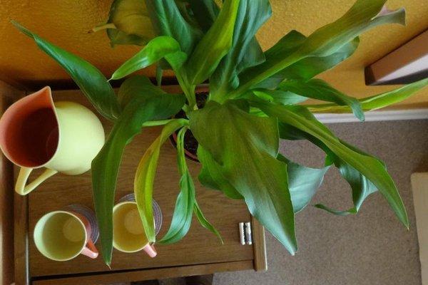 City Centre Green Luxury Room - фото 4