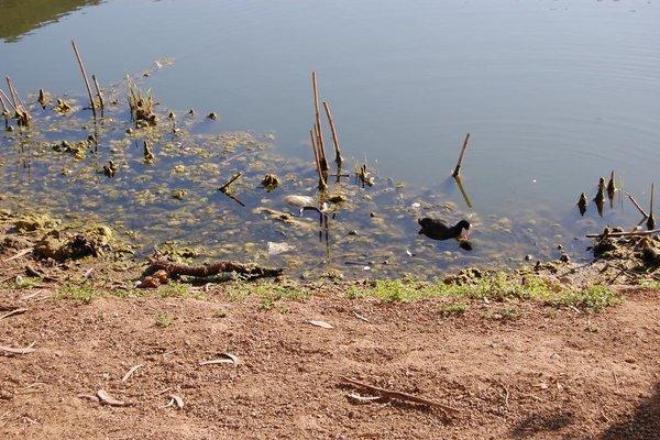 Apartamentos Massanet - фото 14