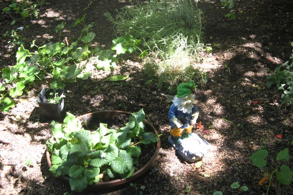 Apartment Fiori - фото 4