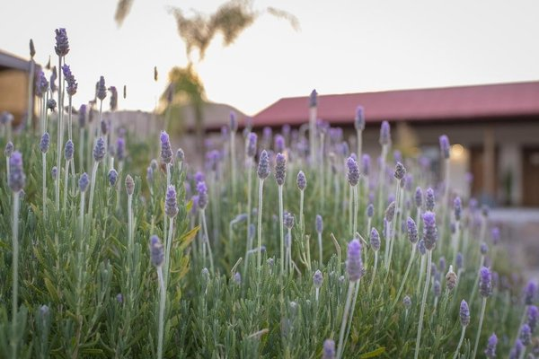 Terra del Valle Bed & Breakfast - фото 11