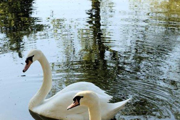 Castello Montegiove - фото 50
