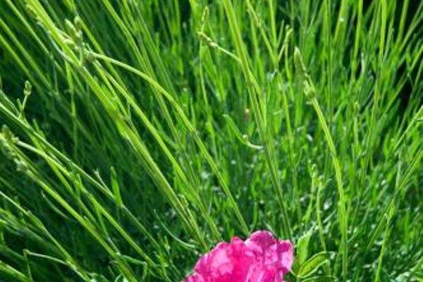 Agriturismo Casale Le Selvette - фото 18