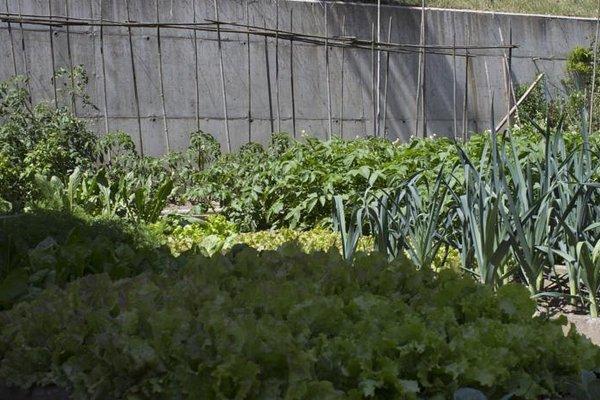 Il Giardino delle Rose - фото 18