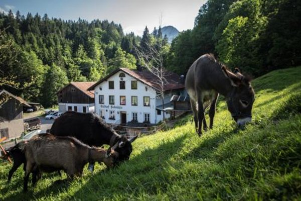 Gasthof Fallmuhle - фото 20