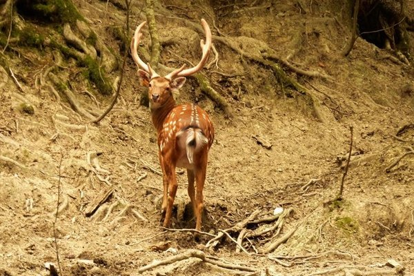 Охотничье Хозяйство Оштенский Кордон - фото 25