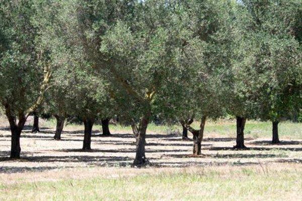 Masseria Prosperi - фото 18