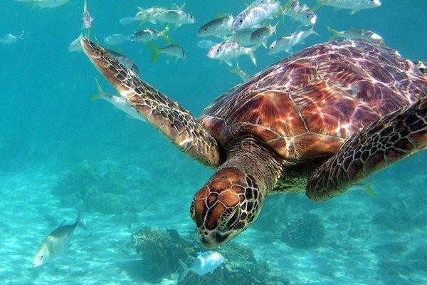 InterContinental Tahiti Resort & Spa - фото 18