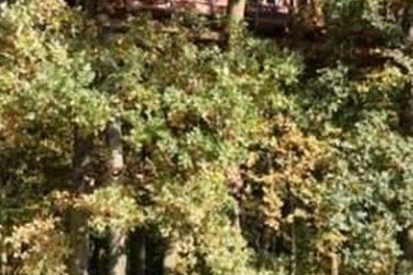 Le Nid Dans L'arbre - 8