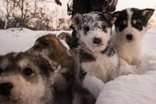 Kirkenes Snowhotel - фото 6