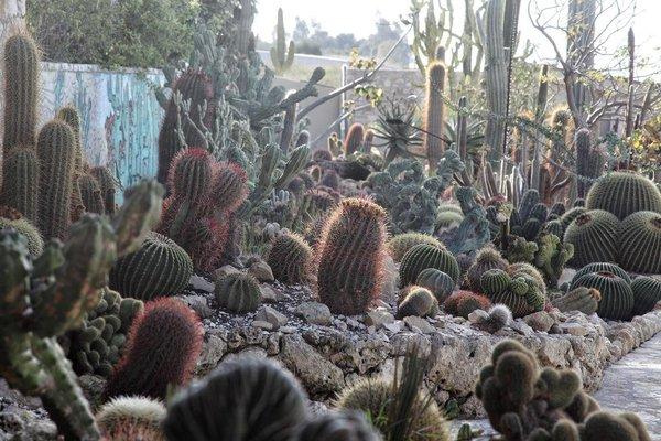 Botanical Park Garden Cactus - фото 18